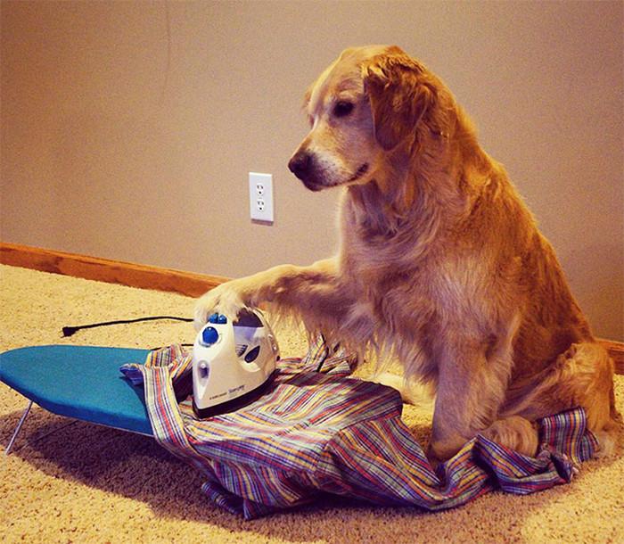 Este cachorro não tem ideia do que está fazendo