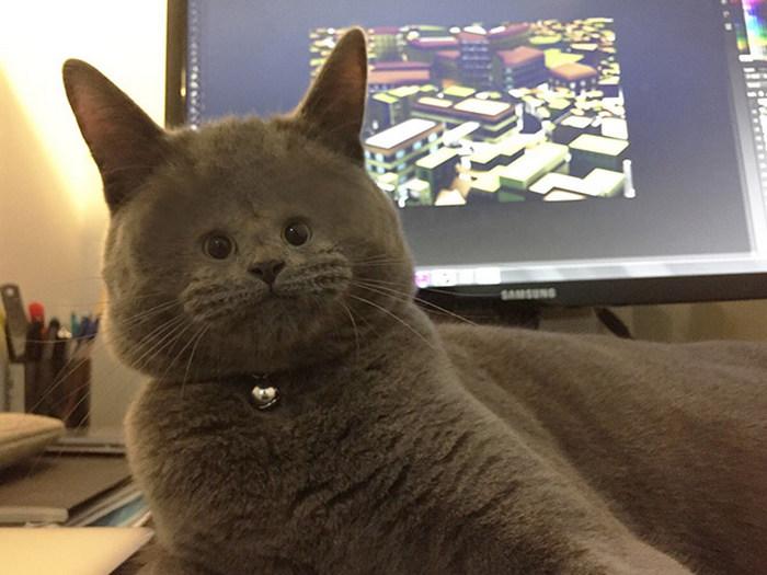 Gatos com rostos muito pequenos