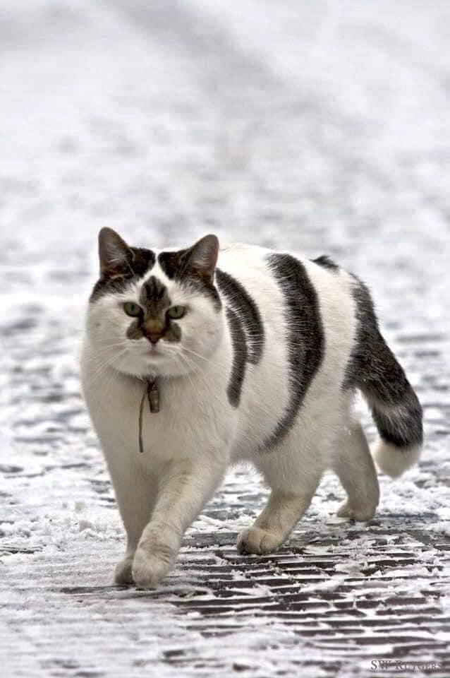 22 Gatos e sua infinita beleza