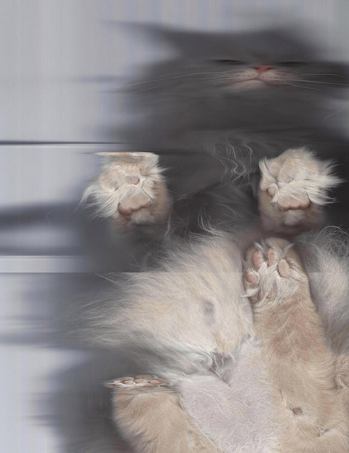 Pessoas entediadas em quarentena começaram a escanear gatos
