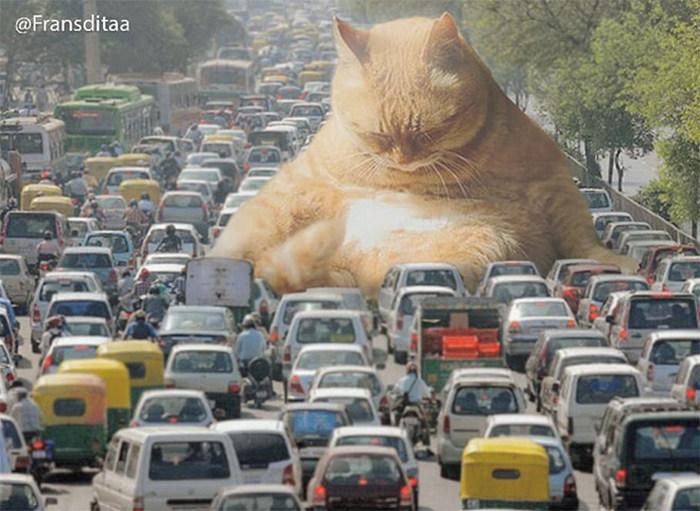 Gatos gigantes em paisagens urbanas