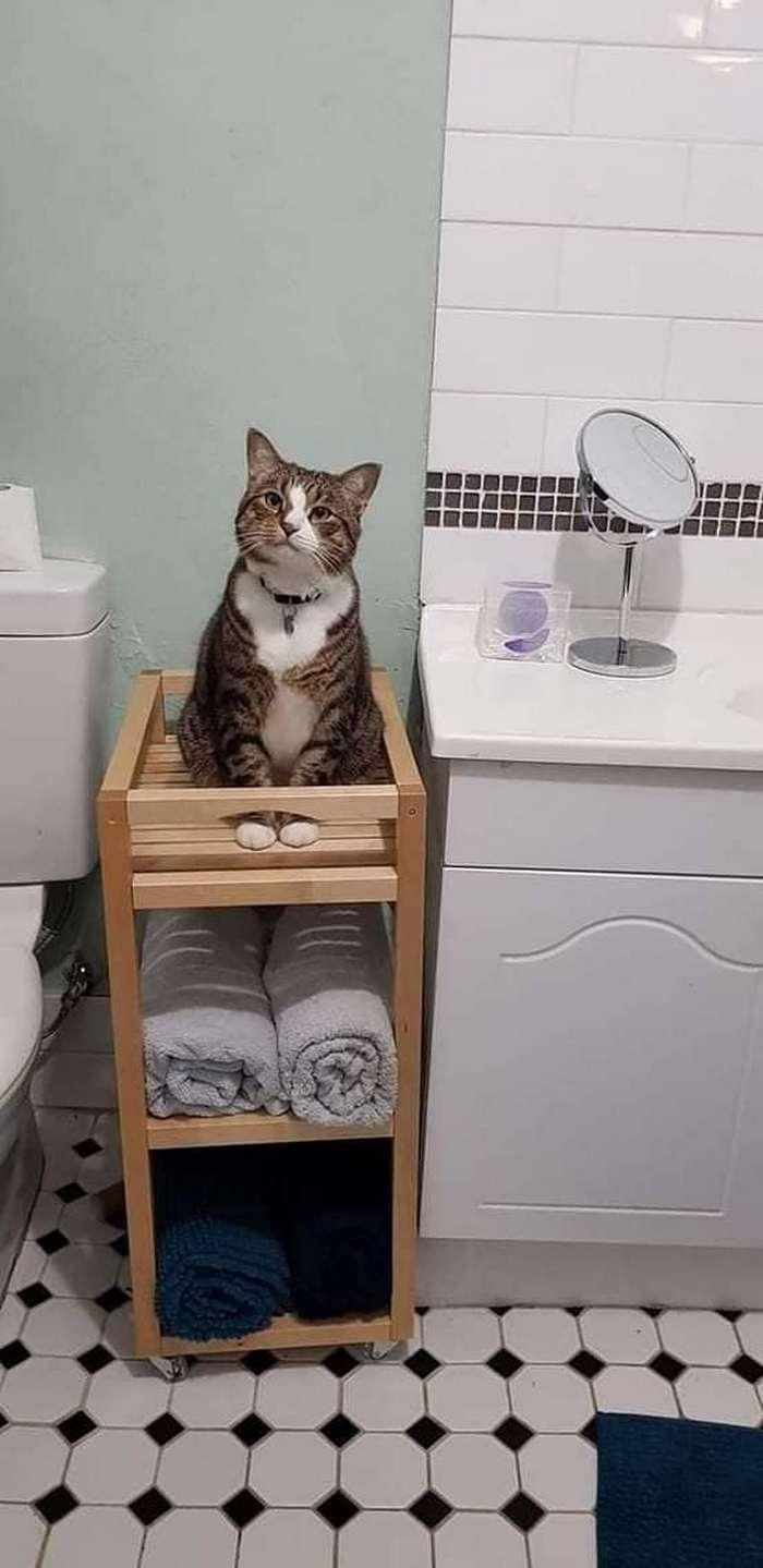No banheiro não tem mais privacidade