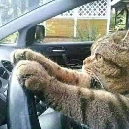 Seu gato quando escuta que você vai adotar outro bichano.