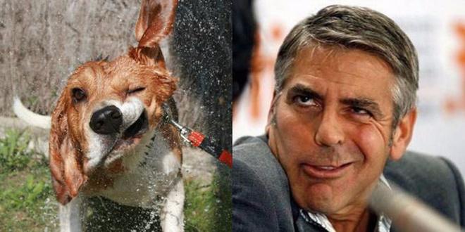 Boa semelhança. Cães são como humanos