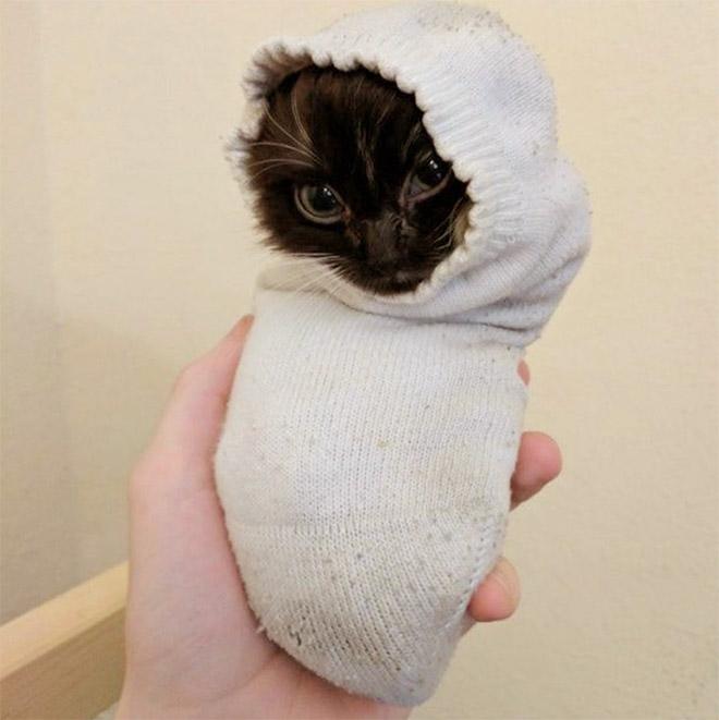 22 gatos que adora dormir confortavelmente em meias
