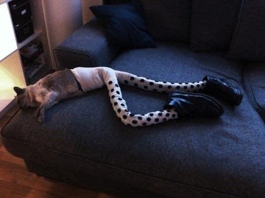 Nova moda para os felinos, pernas para gatos
