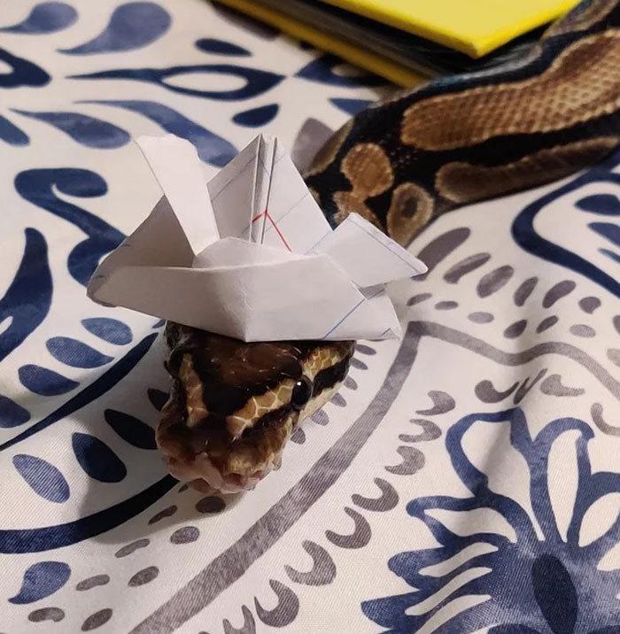 24 provas que chapéus em cobras são uma coisa fofas