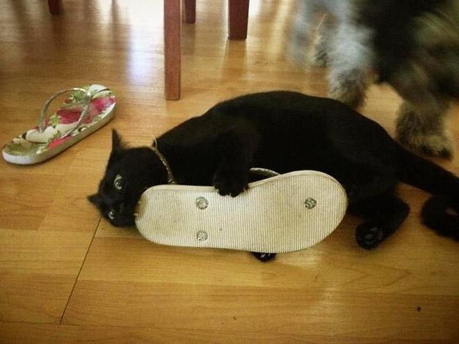 Gatos são animais ferozes que atacam seus próprios dono