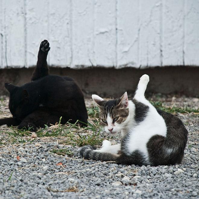 21 gatos sendo interrompidos enquanto se limpava
