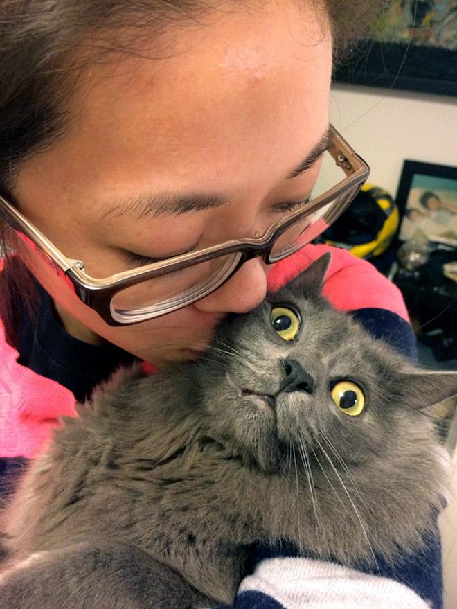 22 gatos que odeiam tirar selfies com seus humanos idiotas
