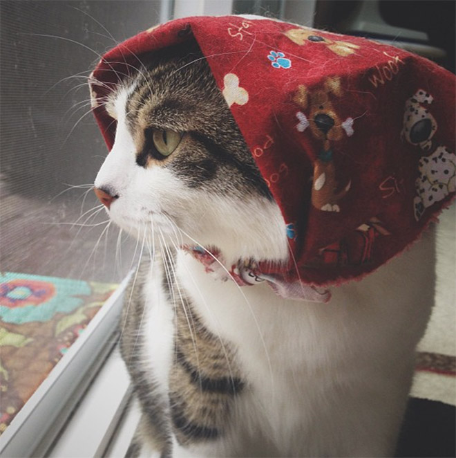 23 gatos que se parecem com velhinhas russas