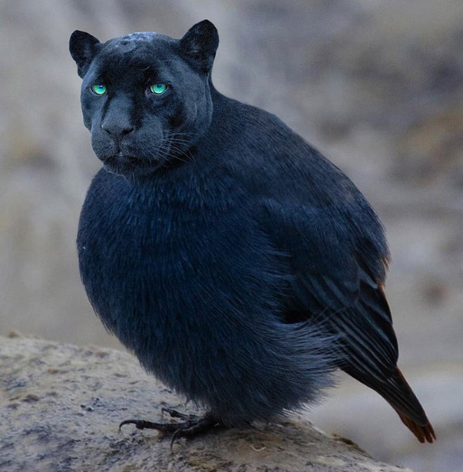 24 híbridos incomuns de gato e pássaro