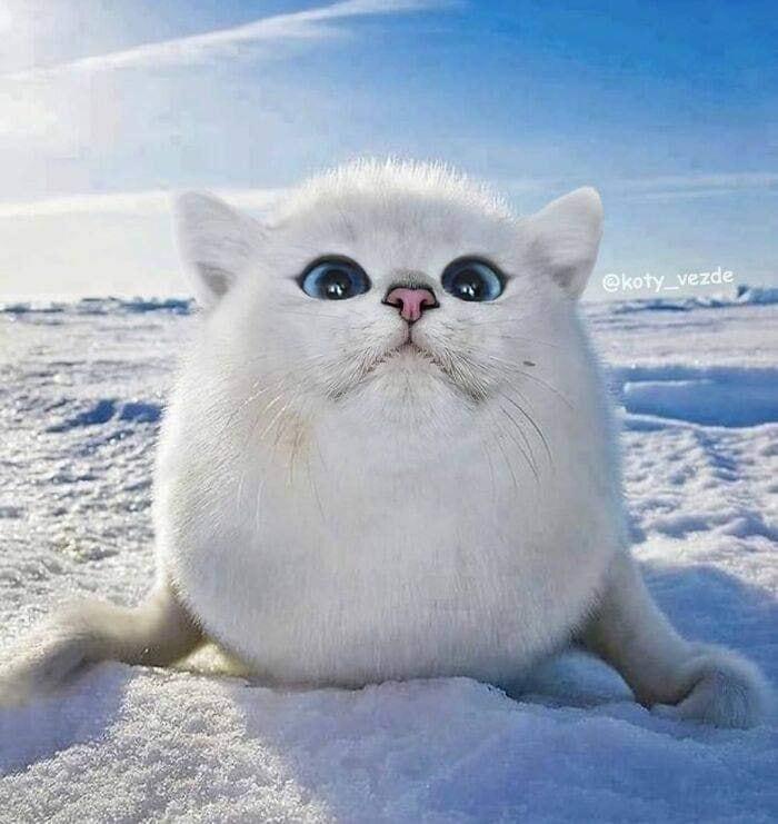 Quem disse que eu só amo gatos? Amo os outros animais também