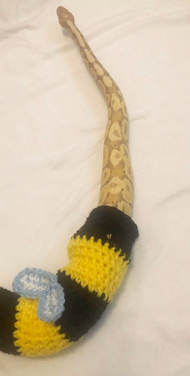 Existem pessoas que faz suéter para cobras de estimação