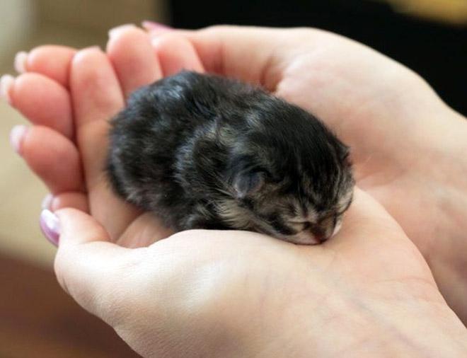23 fotos adoráveis de gatos pequenos