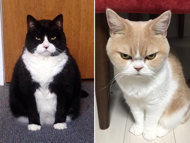 Gatos que estão definitivamente planejando seu assassinato em silêncio