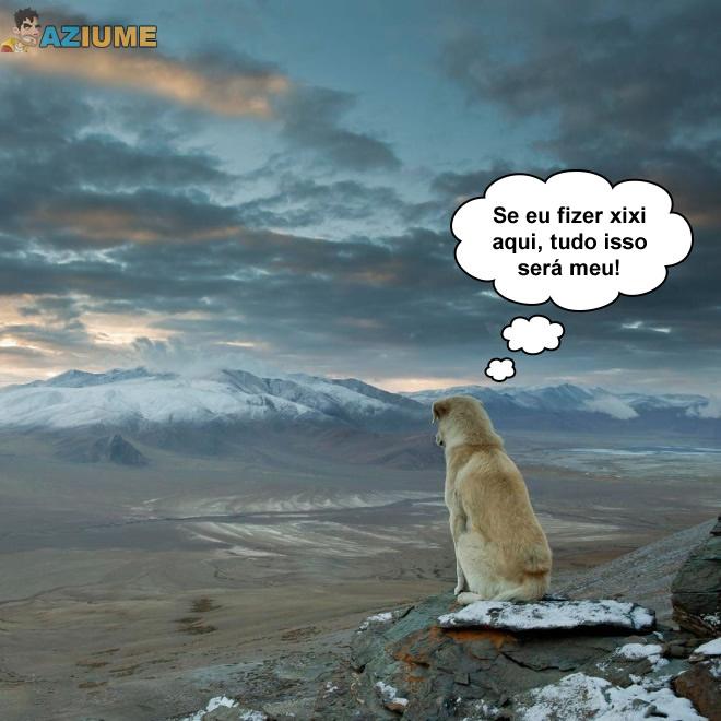 Lógica do cachorro