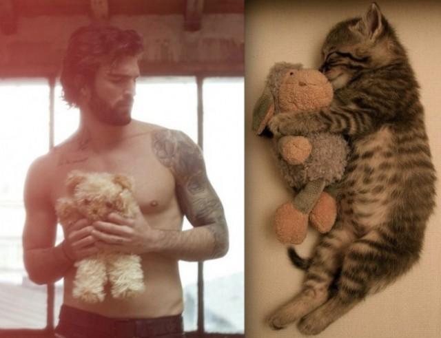 Quando um gato é mais fotogênico do que você