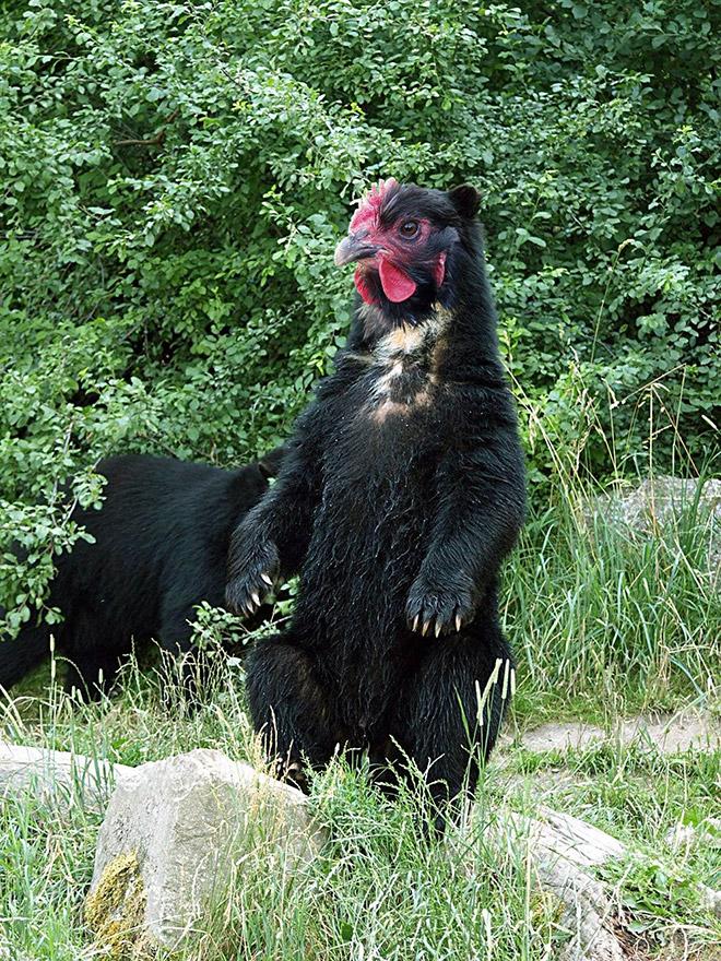 Graças a Deus, os ursos não têm bicos! Eles pareceriam aterrorizantes!