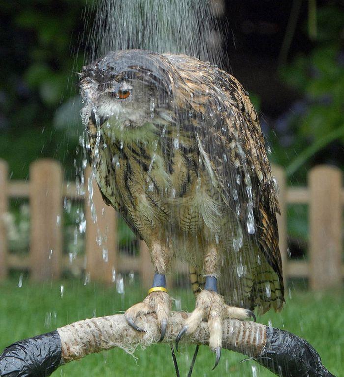 As corujas molhadas são mal-humoradas