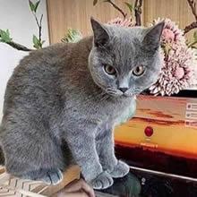 E agora, gato?