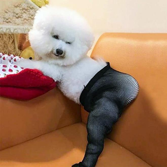 Então agora você pode comprar meias calças para o seu cachorro