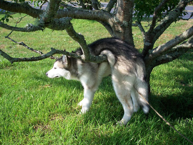 O que há de errado com seu cachorro?