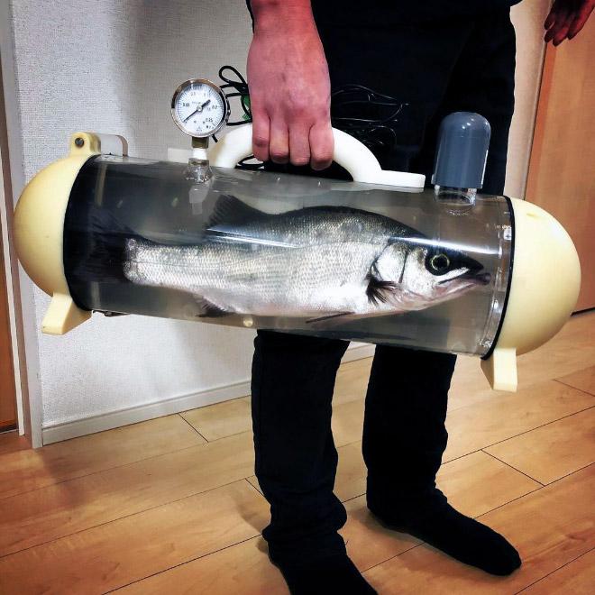 Quer levar seu peixe de estimação para um passeio?