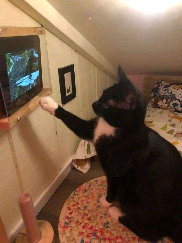 Trabalhar pra dar um quarto para meu gato