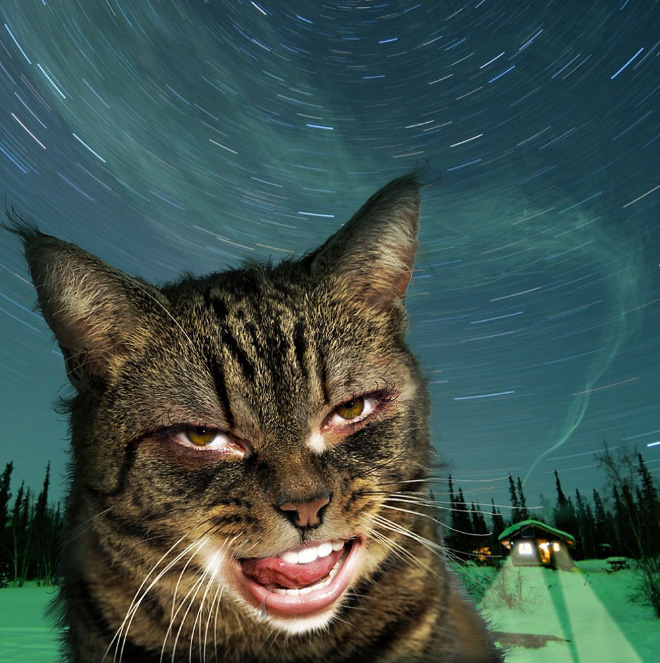 Gatos com boca humana parecem horríveis