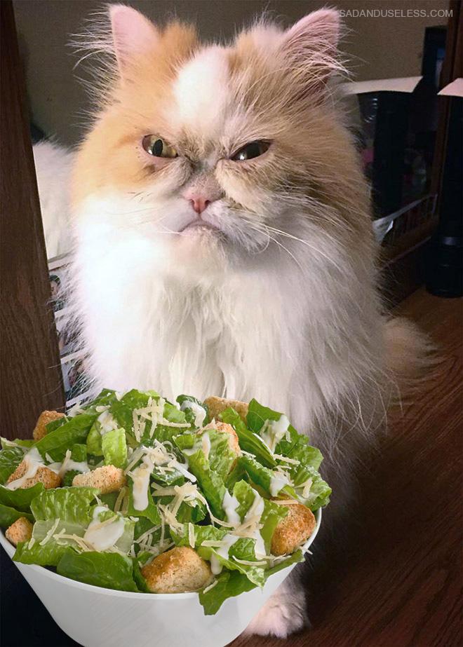 Gatos odeia saladas