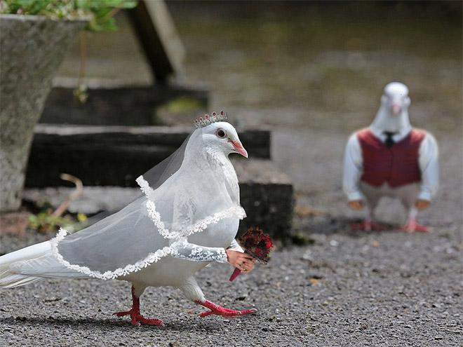 Pássaros com braços humanos