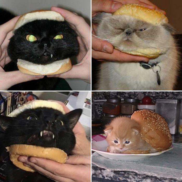 As pessoas estão fazendo sanduíches de gato agora