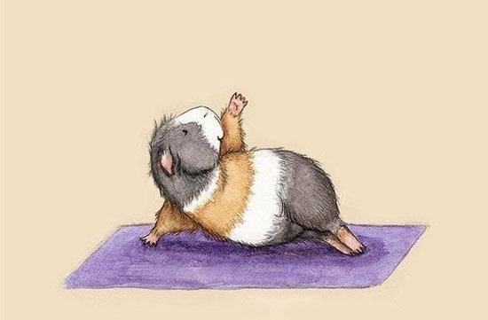 Você sabia que os hamster fazem yoga?