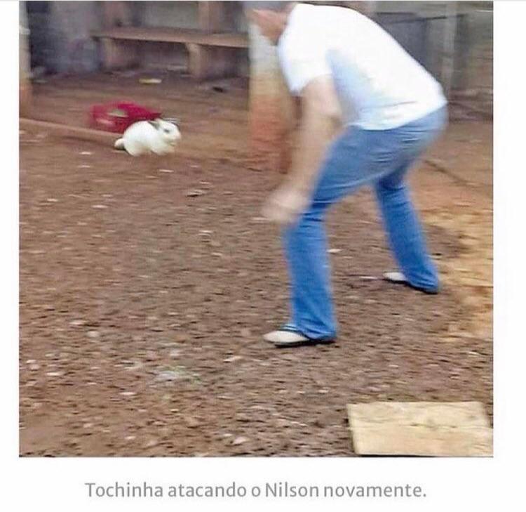 Um coelho nervoso que ataca as pessoas e namora uma galinha